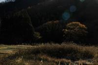 朝の光① - 光画日記2