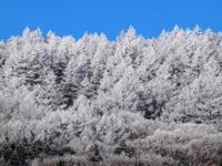 白い森 - 八ヶ岳 革 ときどき くるみ