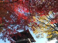 紅葉とイチョウとシュトーレン - Awesome!