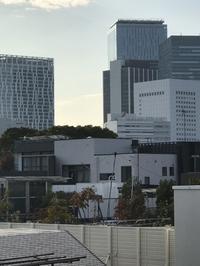 渋谷スカイが見えるベランダとレモンの木 - 青山ぱせり日記
