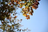 秋色 - ささつぶ