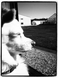 オリンパスのカメラも楽しい - 空を見上げて