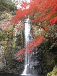 箕面の滝へ紅葉狩り - 花の自由旋律