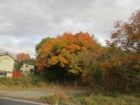 紅葉 - 季節の写真