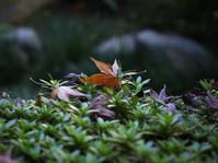 紅葉 - Xiu photo