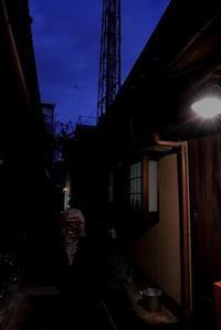 京都の夜がふける - 赤煉瓦洋館の雅茶子