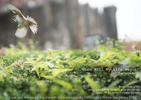自由だ!望遠不要のスナップ実習  雀 動体 sony α7RIV + SEL55F18Z  作例 - 東京女子フォトレッスンサロン『ラ・フォト自由が丘』〜恋フォトからはじめるさいとうおりのテーブルフォトと写真とカメラ〜