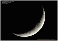 夕月 - 野鳥の素顔 <野鳥と日々の出来事>