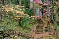 晩秋の公園(弥彦公園) - くろちゃんの写真