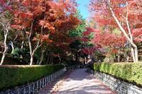 紅葉・黄葉(松雲山荘) - くろちゃんの写真