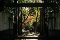 深大寺の秋 - 柳に雪折れなし!Ⅱ