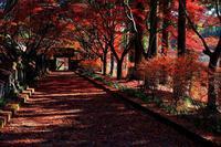 佐野市・仙波「金蔵院」2019年紅葉(2)・・・絶景!紅葉回廊♪ - 『私のデジタル写真眼』