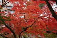 桐生市 崇禅寺の紅葉(2) (2019/11/27撮影) - toshiさんのお気楽ブログ