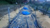 ブルーベリー畑の 除草 施肥 マルチング in 周南市 - 初めてのブルーベリー栽培記