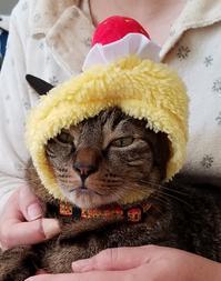 不機嫌 - キジトラ猫のトラちゃんダイアリー