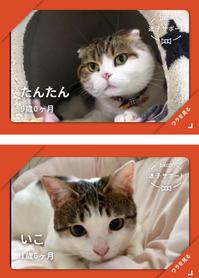 迷い猫いこちゃん - まゆみのお絵描き絵手紙