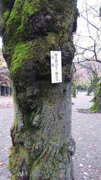 秋の靖国その6 - 東京徒士組の会