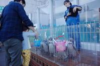 三島市からぶらぶら2日目 その5 ~ あわしまマリンパーク ペンギンのごはん - 「趣味はウォーキングでは無い」