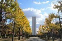 大仙公園・平和塔前のイチョウ並木・ケヤキ並木 - たんぶーらんの戯言