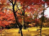紅葉の京都二日目('ω') - ほっこりしましょ。。