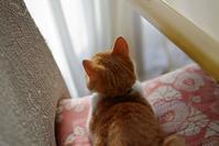 猫の後ろ姿と後頭部 - ぶん屋の抽斗