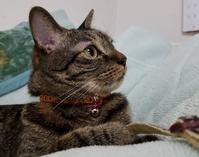 横顔のアナタ - キジトラ猫のトラちゃんダイアリー