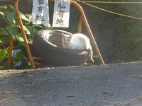 散歩のニャンとブラタモリ12月3日(火) - しんちゃんの七輪陶芸、12年の日常