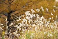 秋色重ね#2 - 但馬・写真日和