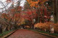 佐野市 金蔵院の紅葉 (2019/11/27撮影) - toshiさんのお気楽ブログ