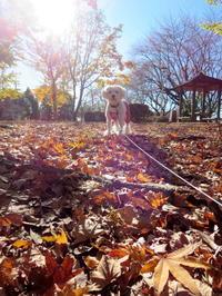 今日の公園♪ - おぽログ♪