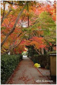 嵐山嵯峨野にてⅢ - 今日のいちまい