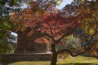 特別拝観・鎌倉長寿寺の紅葉 - エーデルワイスPhoto