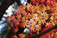 今年最後の紅葉狩り - 季節の風を追いかけて
