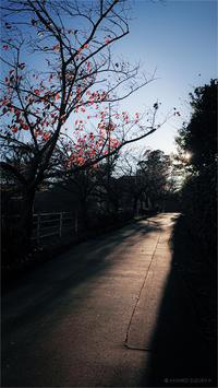 長い影 - day's photo.