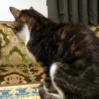 猫のマトリョーシカ - 続ねこのひと~むらよしみのぶろぐ