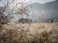 早朝の霜 - 三日おばさん