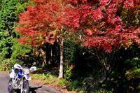 紅葉黄葉も終わったなツーリング - じじい見習いtroutのアウトドアライフ