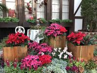クリスマスフォトスポット - 神戸布引ハーブ園 ハーブガイド ハーブ花ごよみ