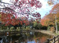 紅葉バックにサイクリング・ジョギング/大江川緑地 - 緑区周辺そぞろ歩き