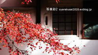 御所に行く12月(2019年)-3 - 写楽彩2