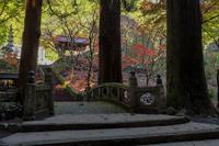 洞慶院の紅葉 - やきつべふぉと