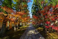 新光明寺の紅葉 - やきつべふぉと