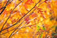 秋色重ね#3 - 但馬・写真日和