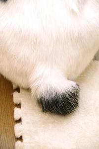 しっぽ似 - ぶつぶつ独り言2(うちの猫ら2018)