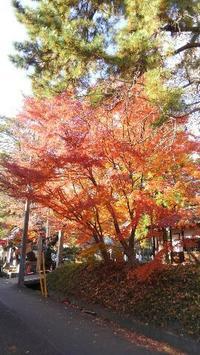 呑龍様の紅葉は今が見頃だよ~☆ - 占い師 鈴木あろはのブログ