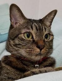 要望 - キジトラ猫のトラちゃんダイアリー