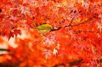紅葉と鳥 - 風見鶏日記