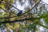 2019年の決算(サンコウチョウ) - 野鳥などの撮影記録