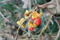 生命をつなぐ~それぞれの果実~ - 里山の四季