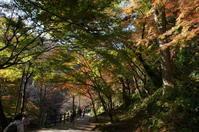 今年の紅葉は奈良&養老その3 - こよみ便り